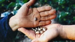 scambio semi